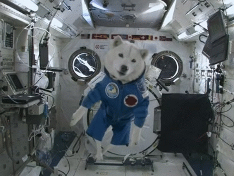 Gigglebit: a short lesson on animals in space