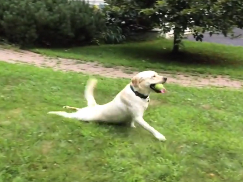 Viral videos of the week: Fainting dog, anchor dog and x-rated cooking