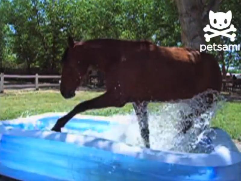Gigglebit: Horse splashes around in kiddie pool