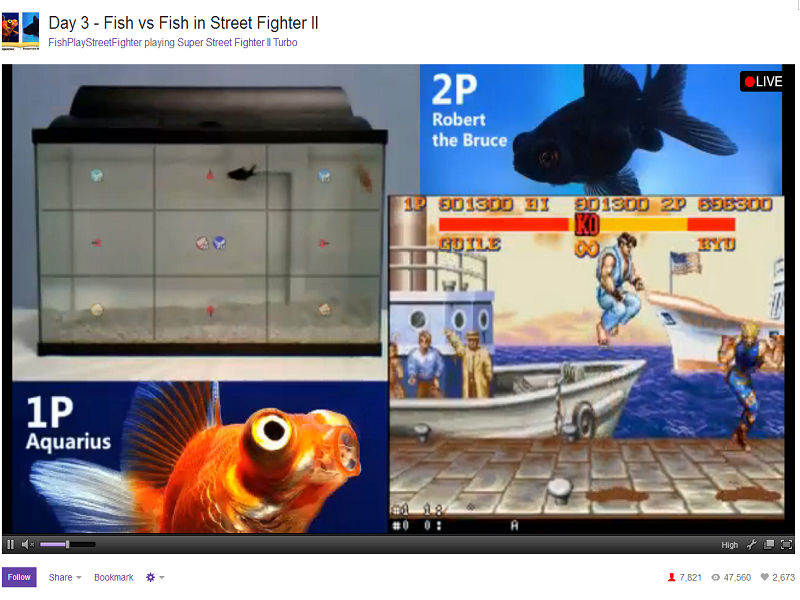 Two pet fish are playing Street Fighter. No, seriously