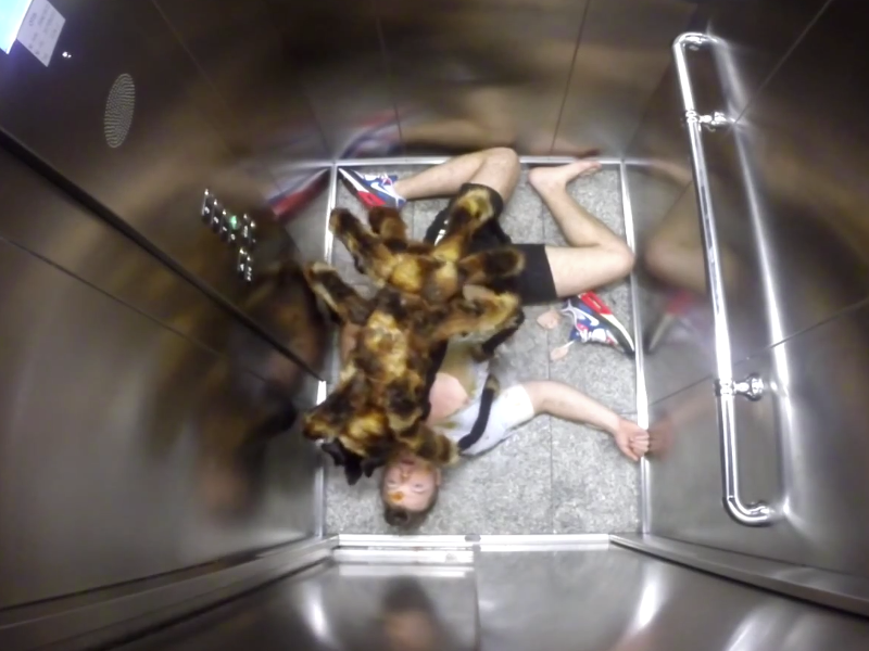 Viral videos of the week: bird poo, spider-dog and Ikea's Bookbook