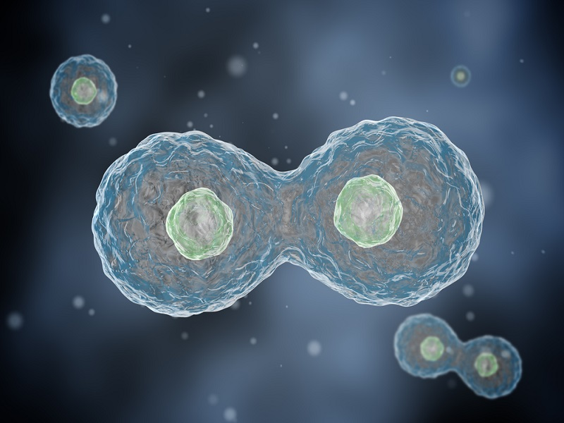 Nobel prize for chemistry awarded for discovery of nanoscopy