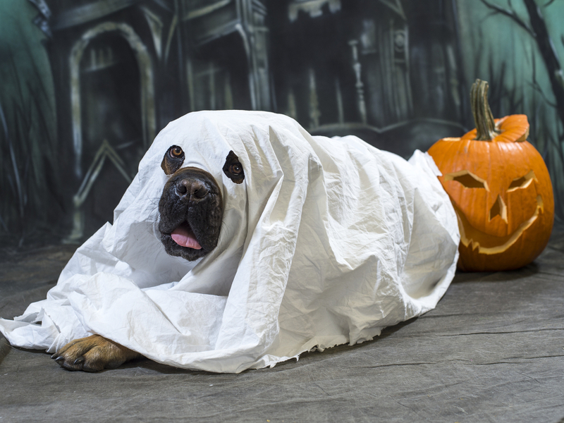 Gigglebit: 8 last-minute Halloween costumes for the lazy tech fan (and 5 for pets!)