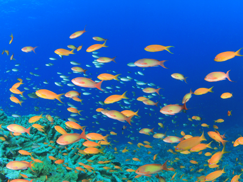Climate change will drive fish out of equatorial region – study