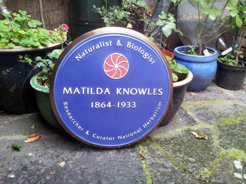 Irish botanist Matilda Knowles honoured after 150 years