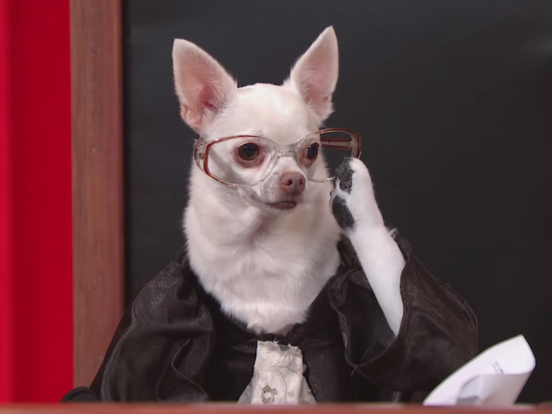 Viral videos of the week: Brad Pitt, The Simpsons, and a Supreme Court of dogs