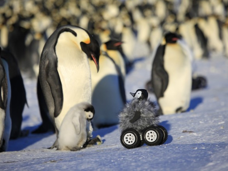 Rovers used as ice-breakers with penguins