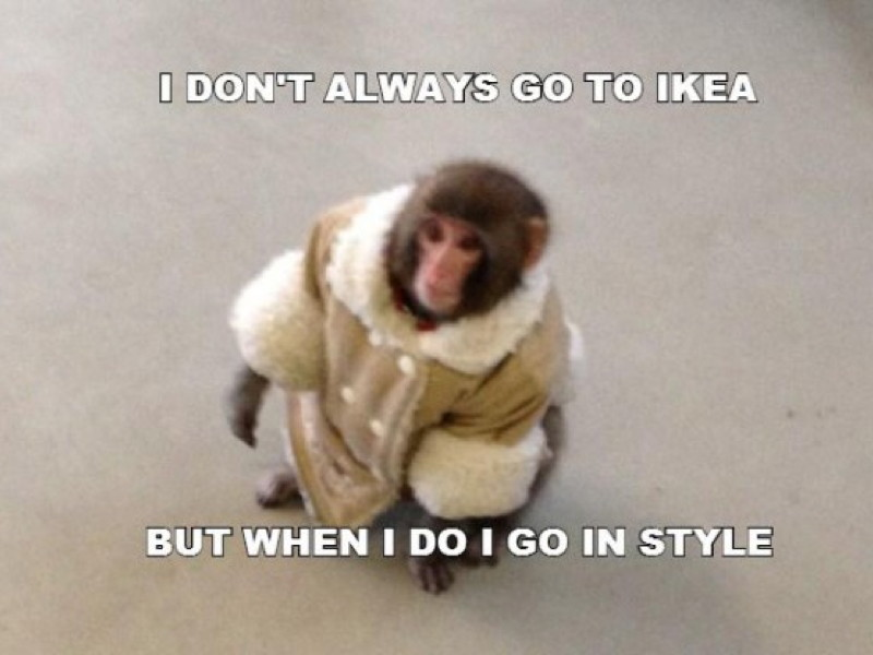 Gigglebit: Ikea Monkey – where is the internet star two years later?
