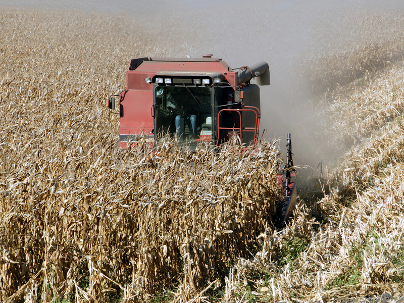 We've gotten it wrong: Biofuels don't reduce greenhouse gas emissions – report