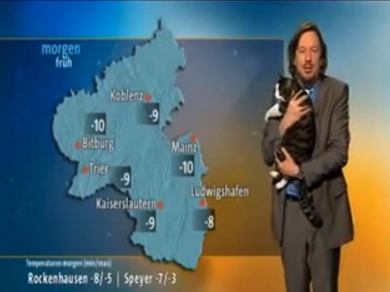 Gigglebit: Cat interrupts weather report