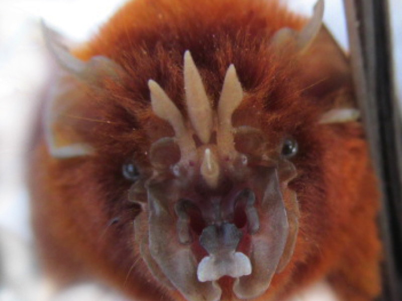 Newly identified bat family could shed light on emerging viruses, say UCD researchers