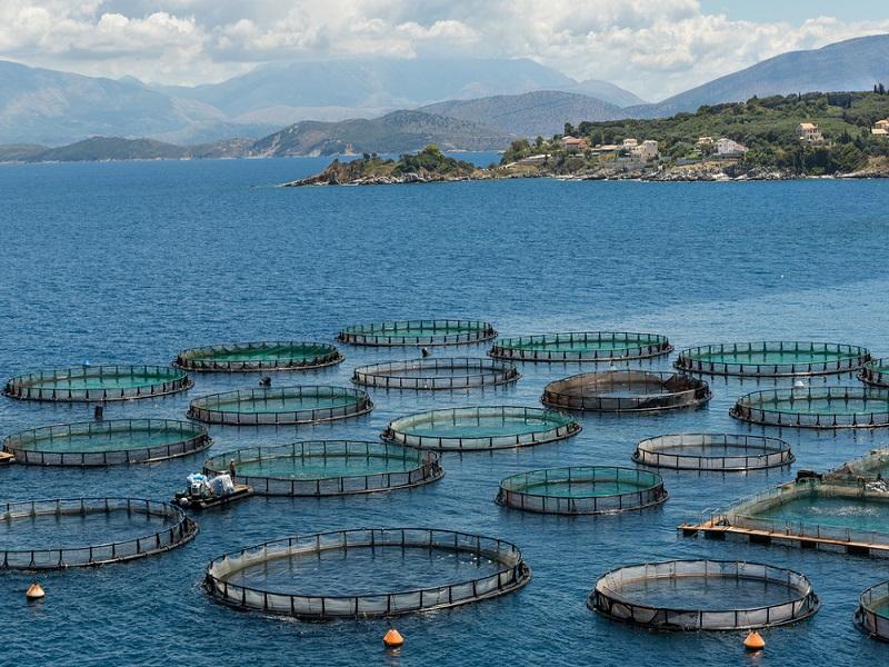 Living the life aquatic: Q-Validus Secures €370,000 for aquaculture data project