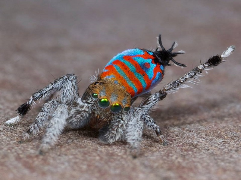 Please welcome Skeletorus and Sparklemuffin, the two newest species of spider