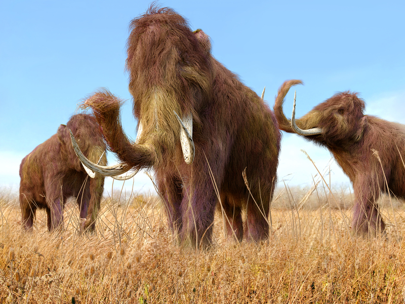 Major breakthrough for possible return of the woolly mammoth