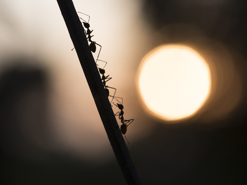 Ants, collective search and colonising the International Space Station