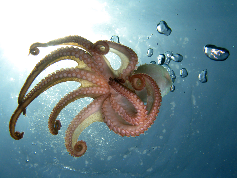 Sony just hired an octopus called Rambo as a photographer. Wait, what?