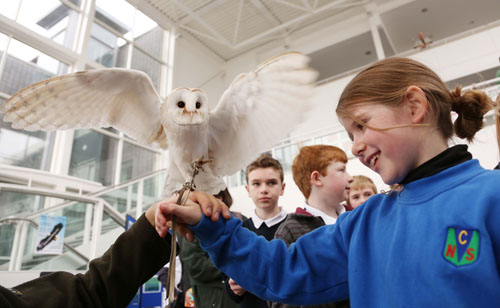 "Lile Hensey pictured holding a barn owl, from ""Eagles Flying"" at the annual science fair at the Institute of Technology Sligo, yesterday"