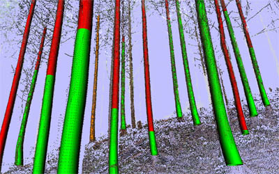 TreeMetrics 3D technology helps foresters map forests