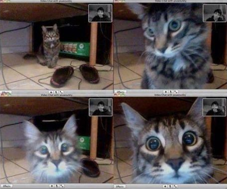 Whiskers the cat does video chat