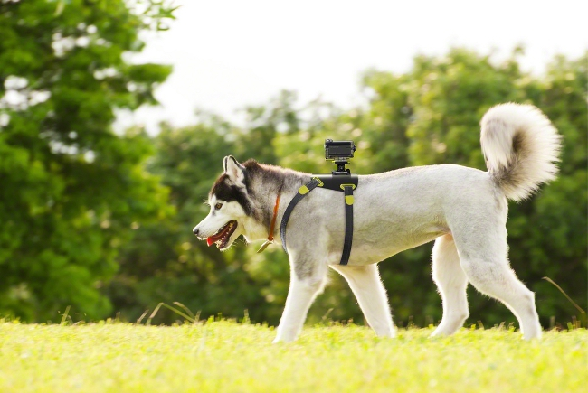 Sony Action Cam HDR-AS15 with the AKA-DM1 dog harness