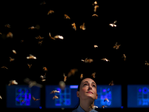 cience Gallery's Lucy Whitaker views the exhibit Magicicada, which explores the music of the cicada insect