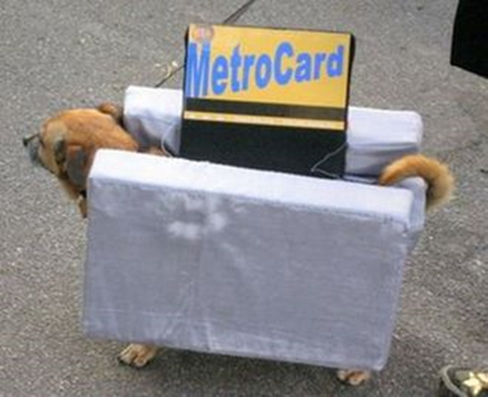 New York Metro Card dog costume