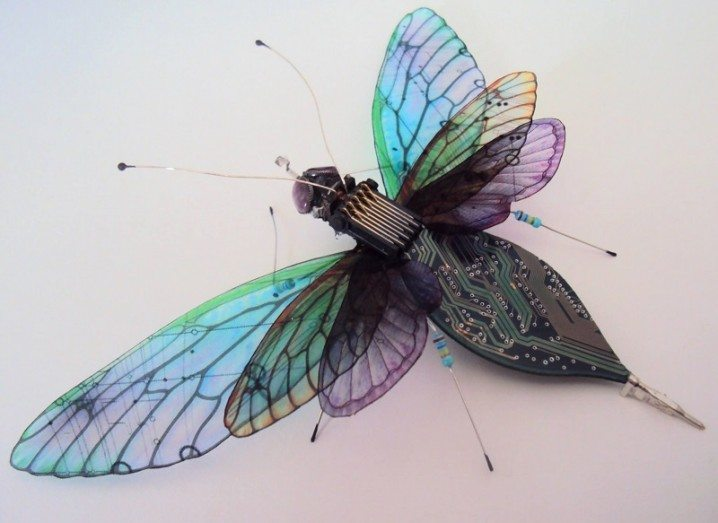 Circuit board insect