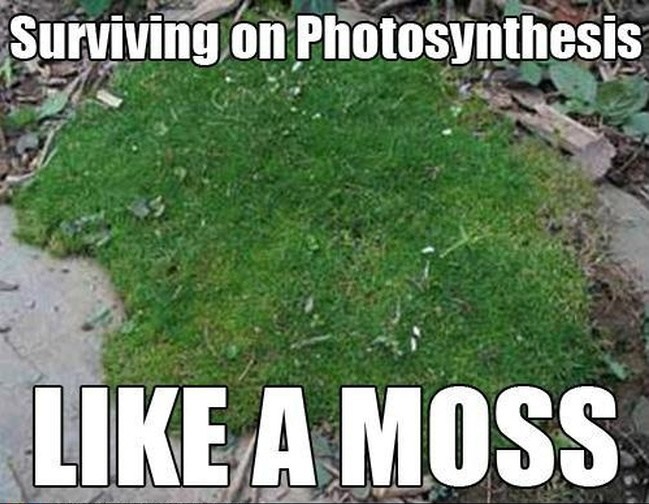 Biologist meme surviving on photosynthesis like a moss