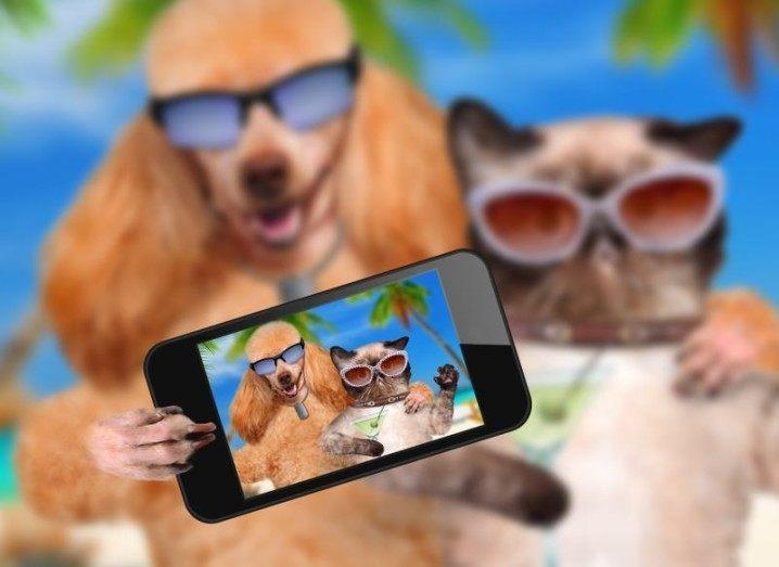 Dog Cat Selfie