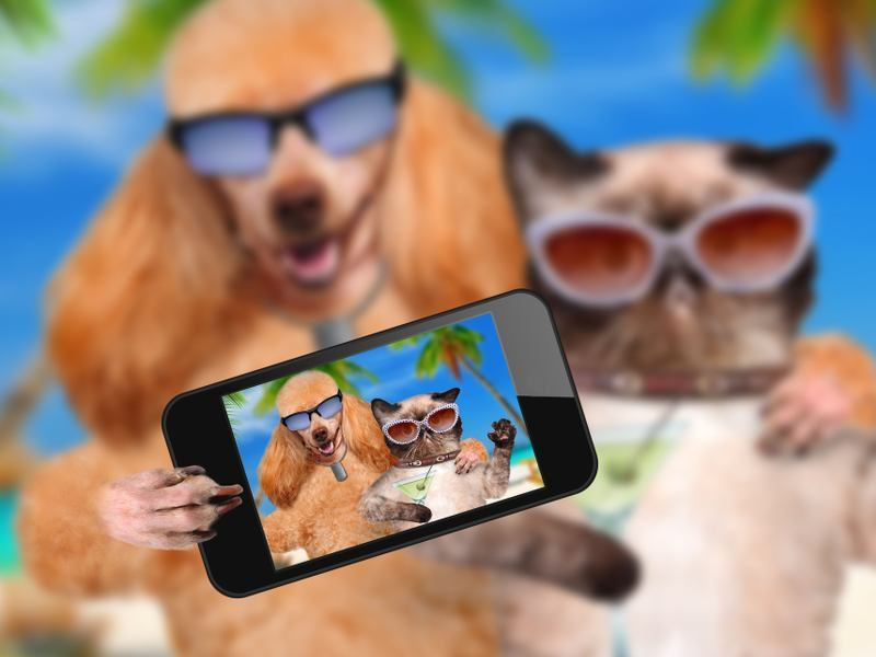 Smart technology turns dogs and cats into iPets