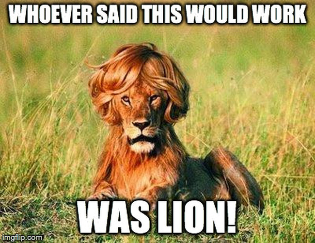 Lion with terrible wig