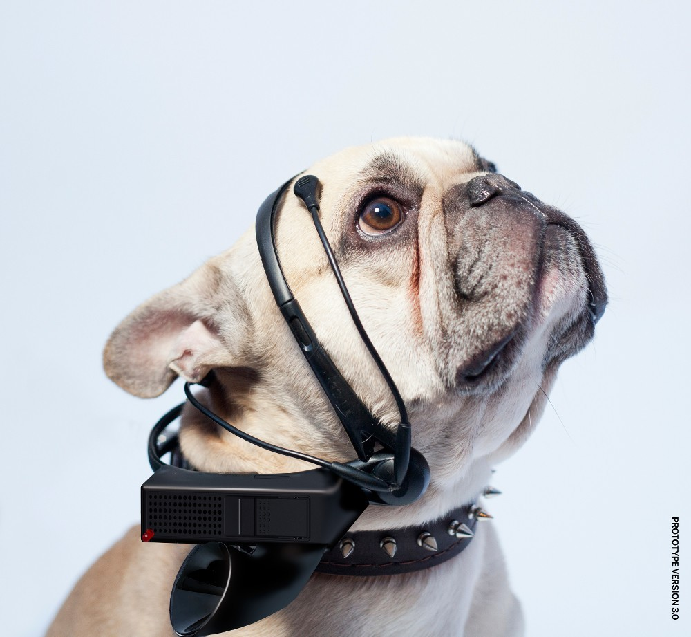 Pets wearables No More Woof