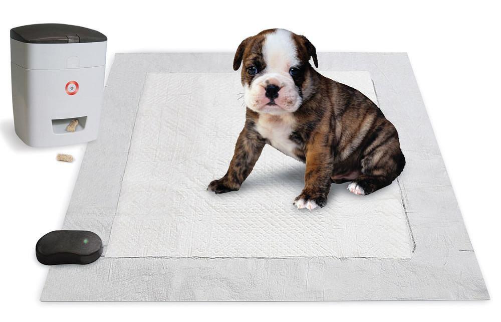 Pets wearables Pavlovian potty trainer