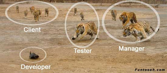 Client, tester and manager tigers hunt developer turkey