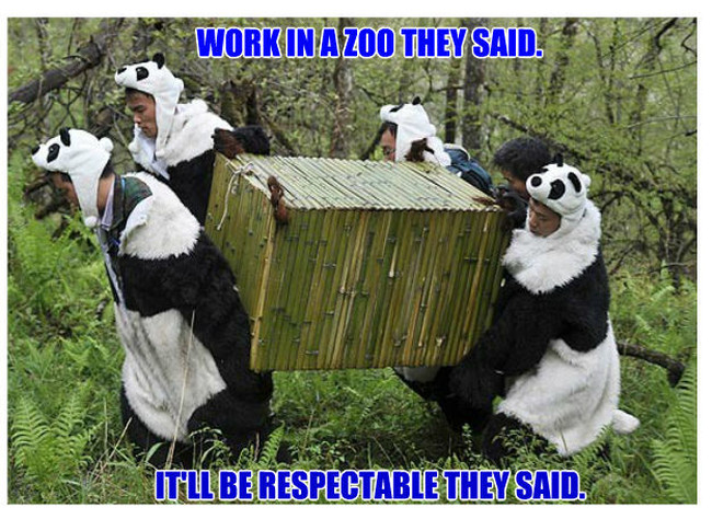 Work in a zoo, they said