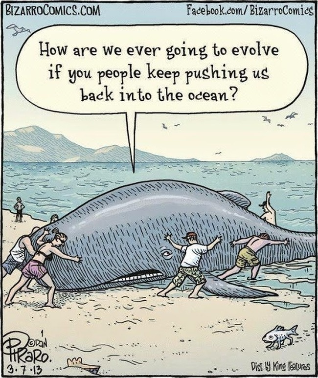 Biologist meme, whale tries forcing evolution, humans having none of it