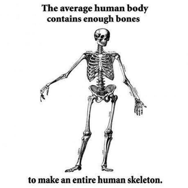 Biologist meme, skeleton humans