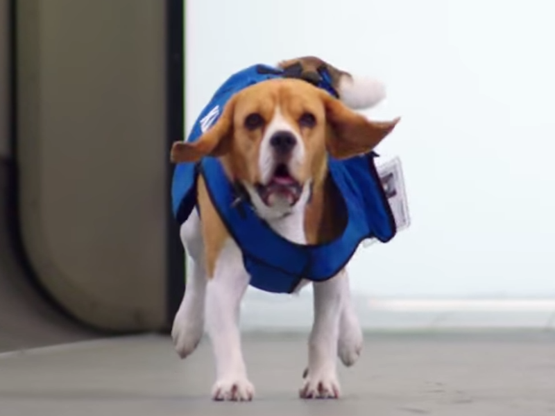 KLM's lost and found goes to the dogs – Gigglebit