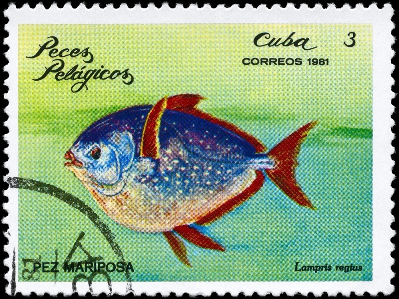 The opah is a big fish, with a warm heart in world first
