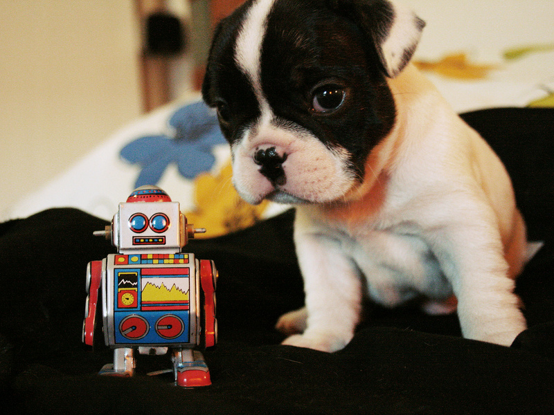 Robopets, the future of owning cats and dogs?