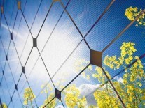 Solar energy harvesting mystery solved by Irish and Qatari scientists