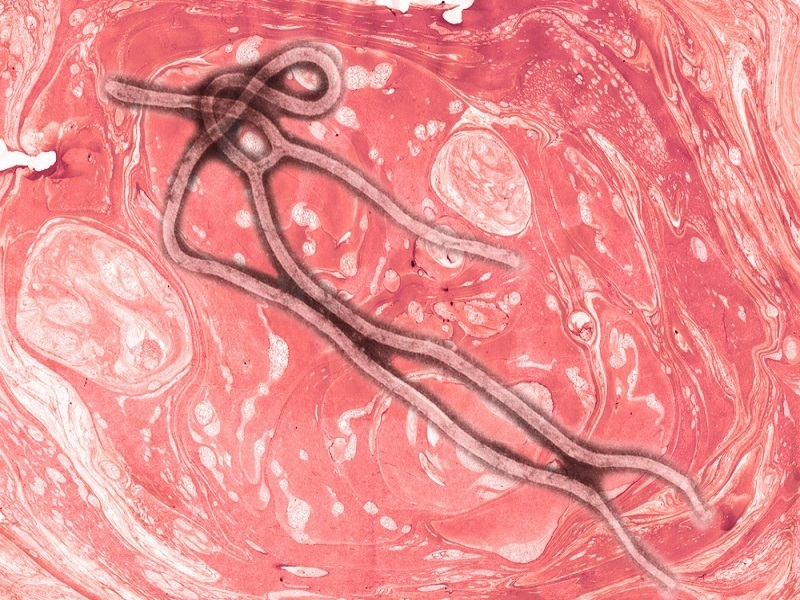 EU team successfully maps genetic evolution of Ebola virus