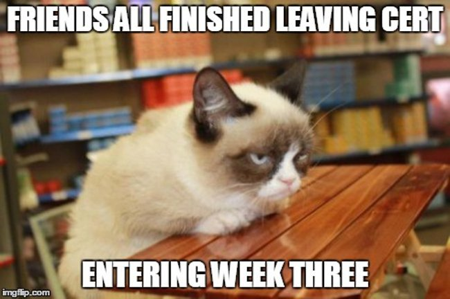 Grumpy Cat not finished exams