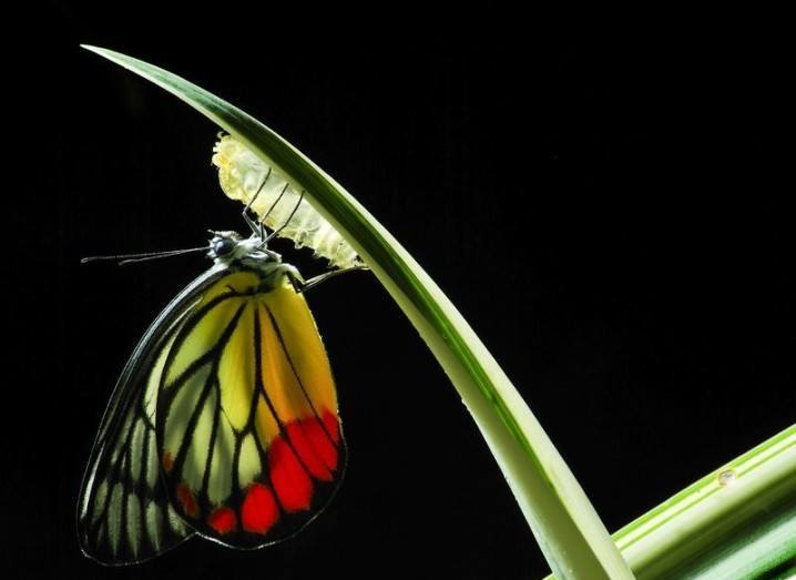 Monarch butterfly image by 2nix Studio via Shutterstock