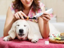 Gadgets news: Toothbrush helmet and personal molecular scanner