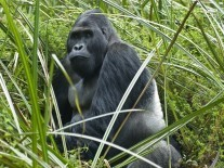 Google apologises after Photos app tags black people as 'gorillas'