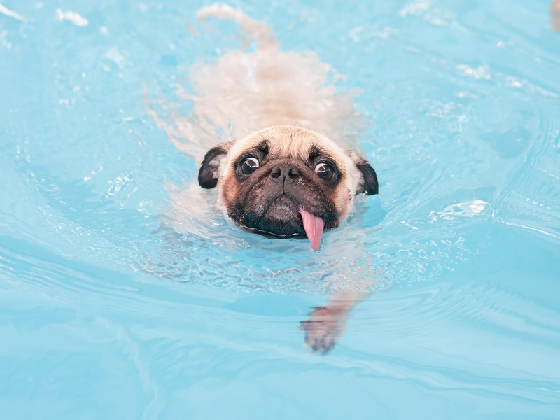 Handling the heatwave: Bears, dogs, pigs and elephants know how