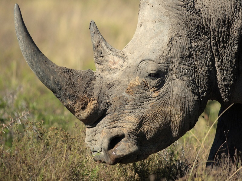 Rhino-horn camera could save species from extinction