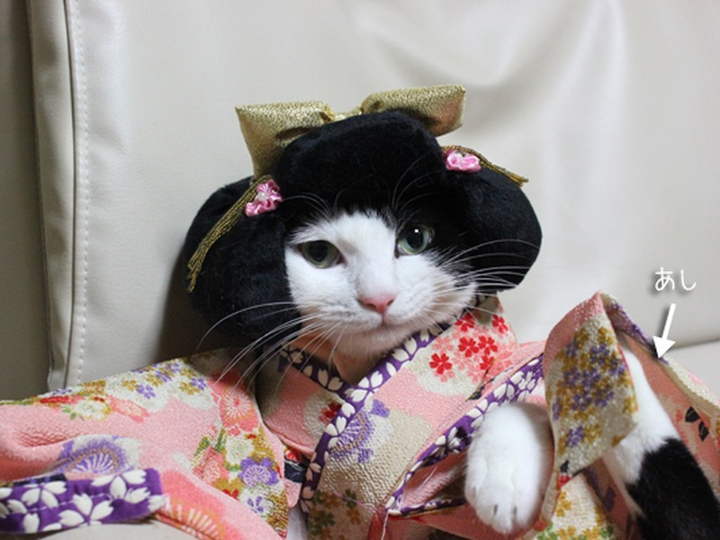 Cats in kimonos is the new cute kawaii craze to hit the internet
