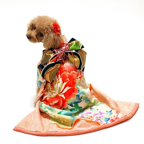 Dogs in kimonos